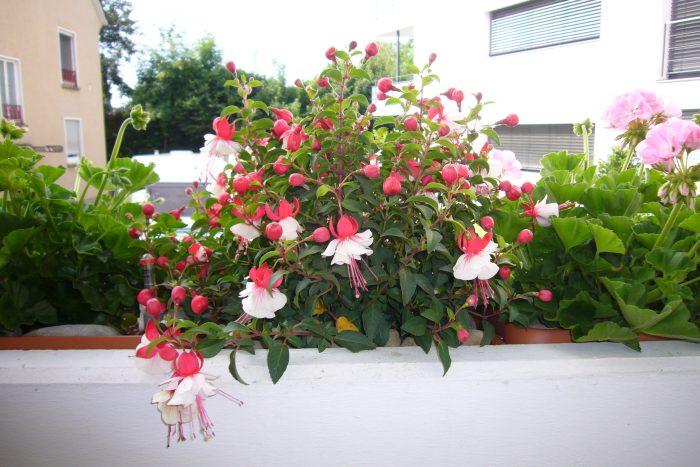 ferienwohnung-deutschle-balkon (14)