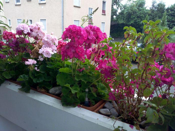 ferienwohnung-deutschle-balkon (6)